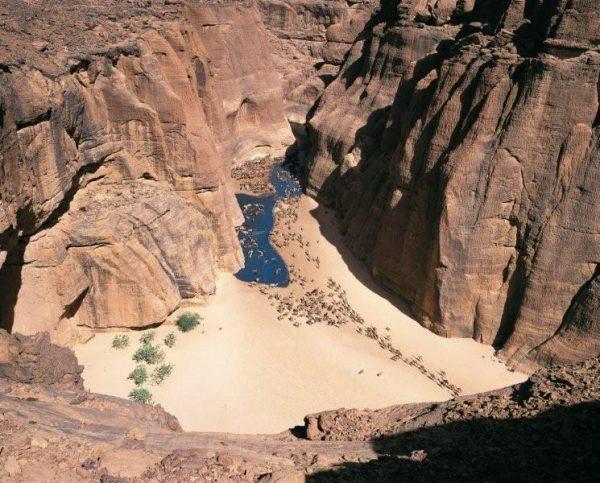 24_Kamele_ziehen_zur_Wasserstelle_im_Ennedi-Gebirge_im_Tschad