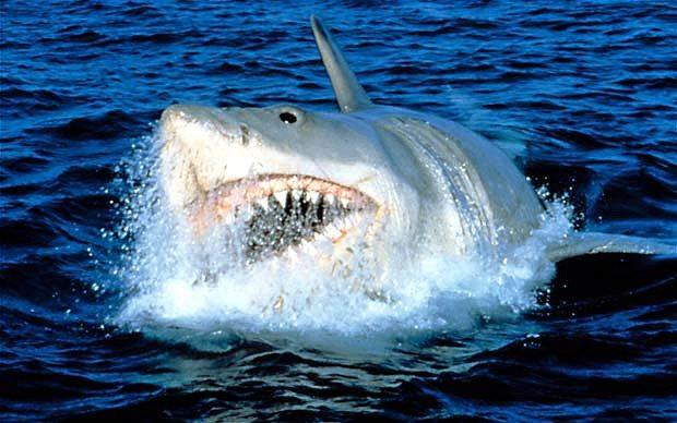 JAWS_2163937b