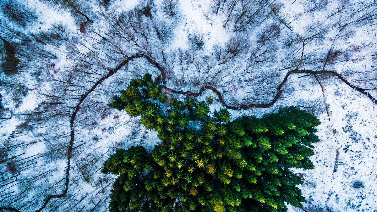 Πρώτο Βραβείο, κατηγορία Αγρια Φύση. Το δάσος Καλίμπρι στην Δανία. Οπως παραδέχεται ο φωτογράφος, ήταν τυχερός γιατί εκείνη τη μέρα είχε χιονίσει, κάνοντας τα πεύκα να ξεχωρίζουν