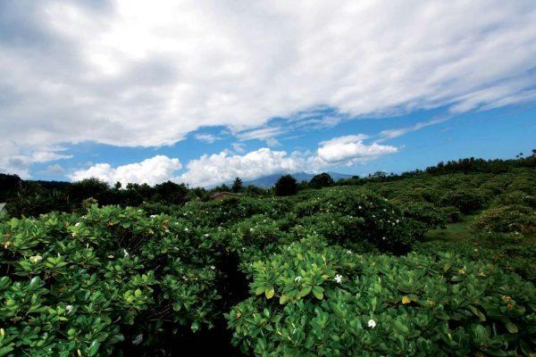 Tahiti-Cote-ouest-vegetation