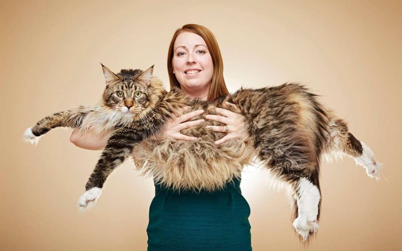 O μεγαλύτερος γάτος σπιτιού είναι ο «Λούντο» με μήκος 118,33 εκατοστά. Ζει με την ιδιοκτήτριά του στην Αγγλία