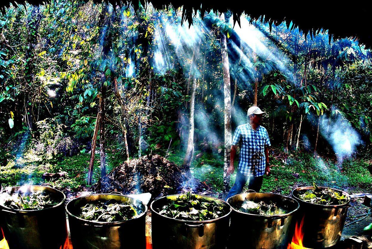 Ayahuasca_Amazon_pots