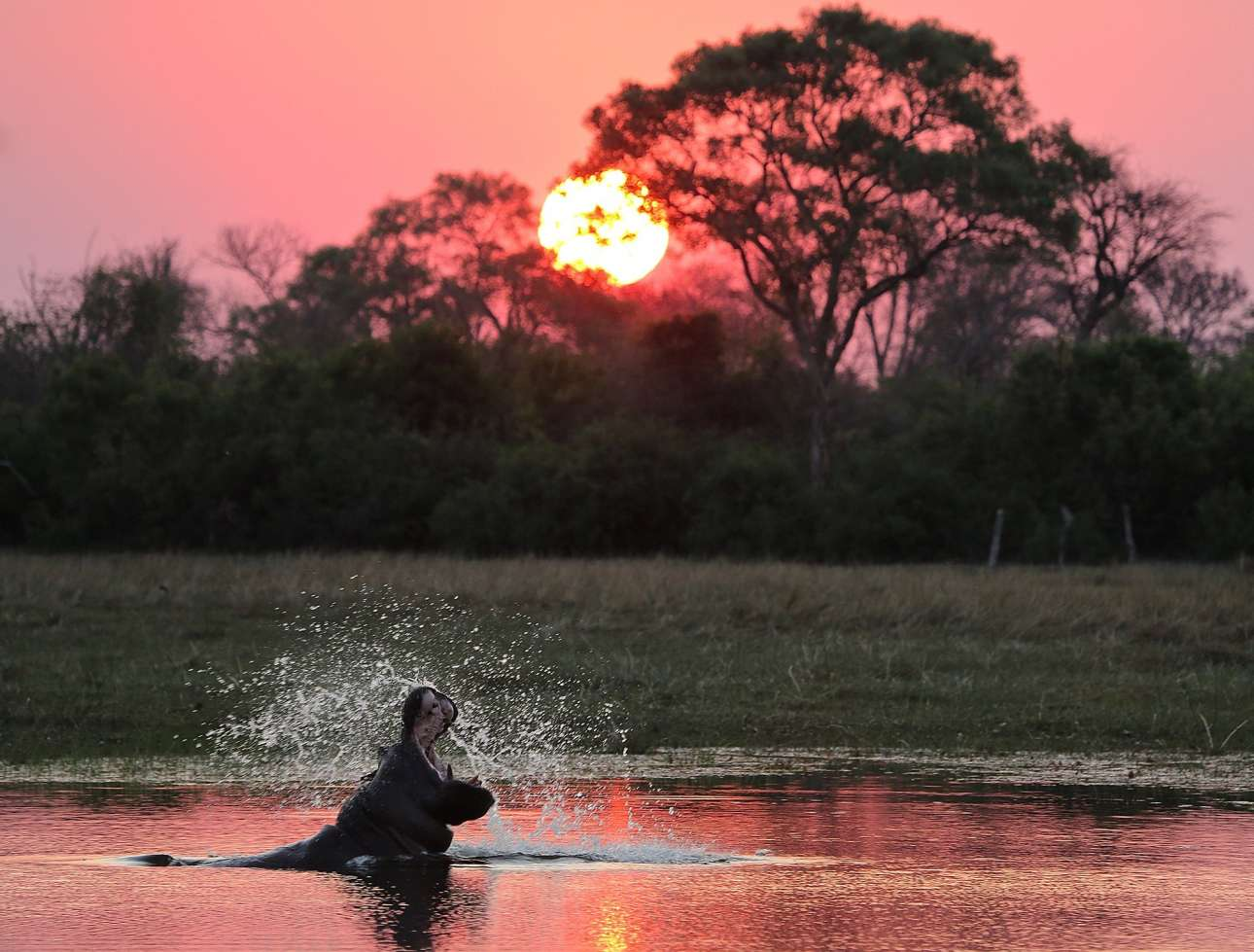 4 Οκτ. Ιπποπόταμος «κυνηγά» τον ήλιο και ο φωτογράφος Τζέρεμι Κιούζακ διακρίνεται στην ομώνυμη κατηγορία («Κυνηγώντας τον ήλιο») στον διαγωνισμό φωτογραφίας της Εταιρείας Ζωολογικών Κήπων Λονδίνου (ZSL) για την Παγκόσμια Ημέρα των Ζώων