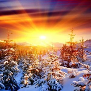 spruces-west-winter-sun