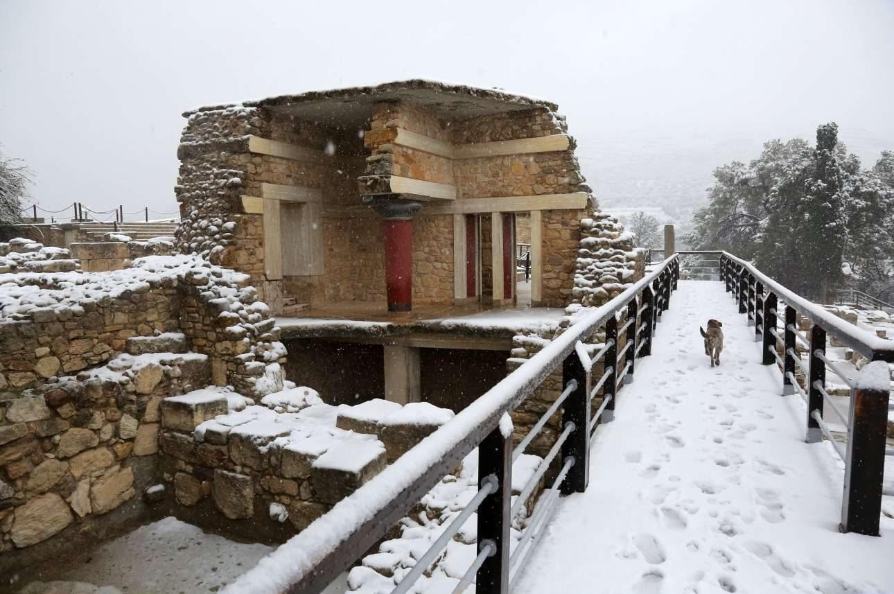 Ενας θαρραλέος σκύλος κάνει την δική του βόλτα στον αρχαιολογικό χώρο της Κνωσού στο Ηράκλειο Κρήτης. Οι άνθρωποι φυσικά απουσιάζουν