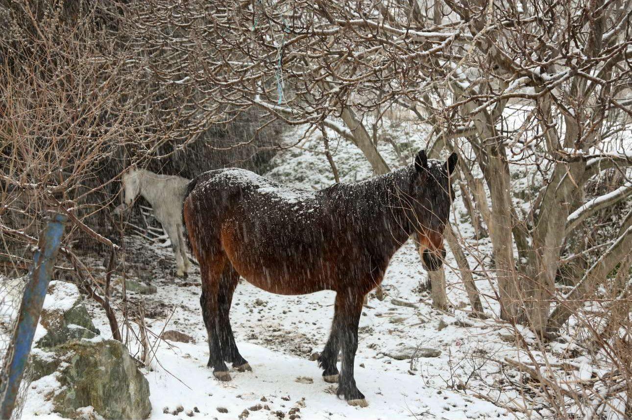 Δύο πανέμορφα άλογα αντιμέτωπα με τη βαριά χιονόπτωση στη Μυτιλήνη