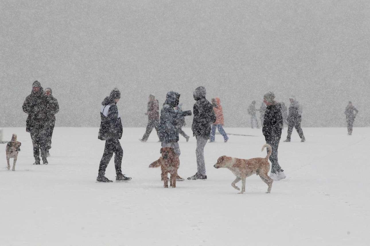 Απόγευμα Τρίτης, 10 Ιανουαρίου. Υπό σφοδρή χιονόπτωση οι Θεσσαλονικείς βγάζουν τα σκυλιά τους βόλτα.