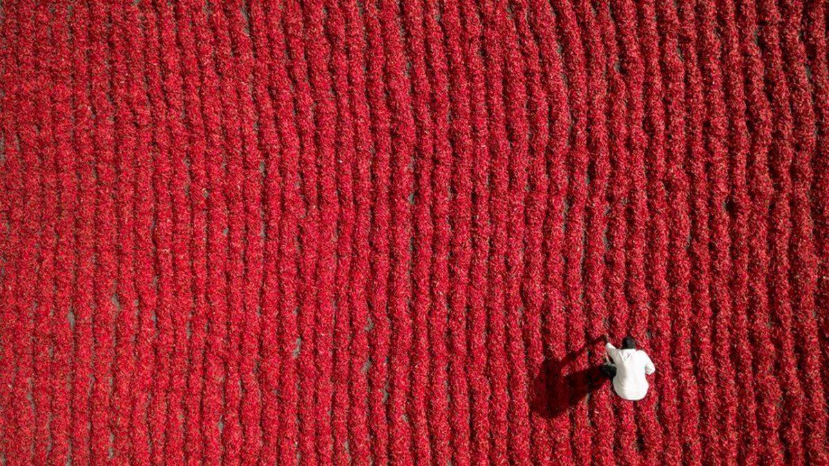 Ο αγρότης από την Ινδία μοιάζει σαν μια λευκή κουκίδα μέσα σε μια «θάλασσα» από κόκκινες πιπεριές τσίλι