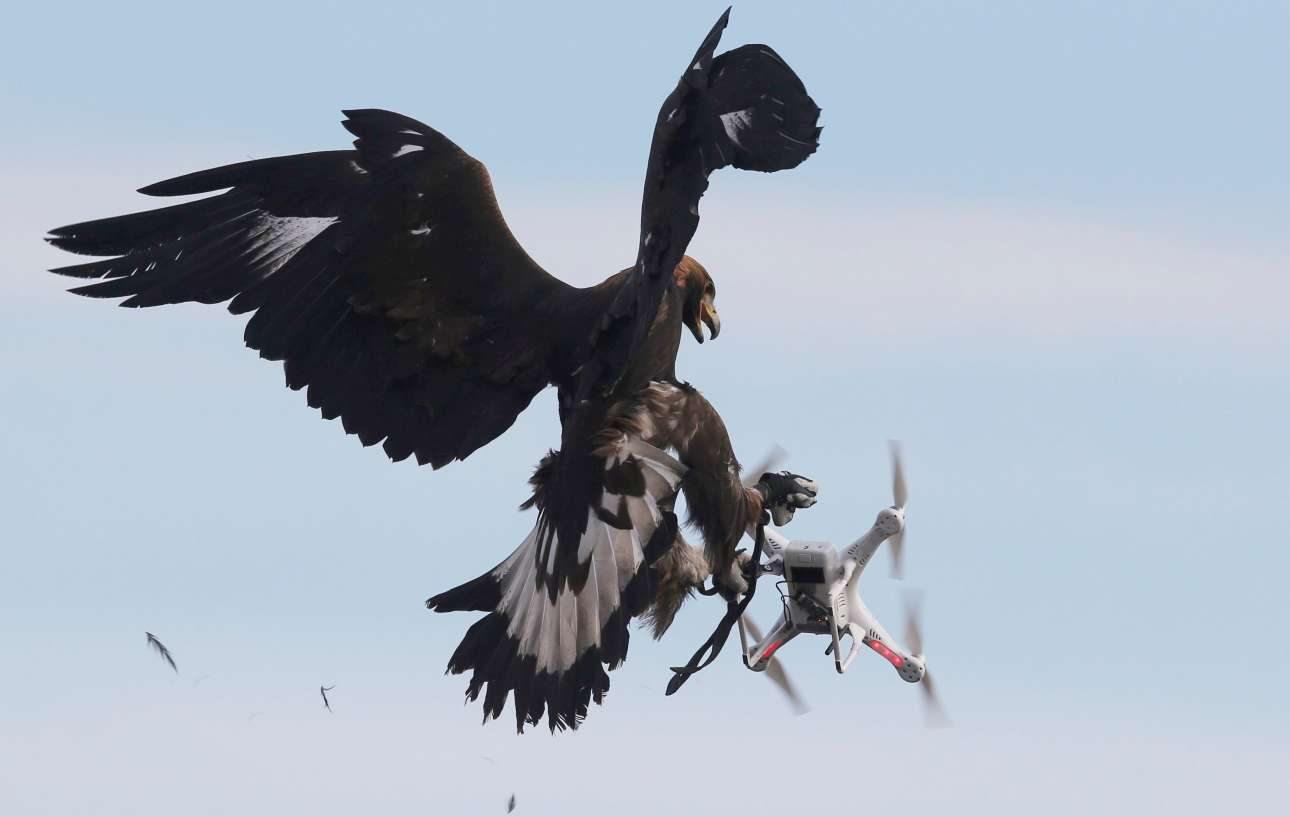 Η στιγμή που ένας αετός εξολοθρεύει ένα drone