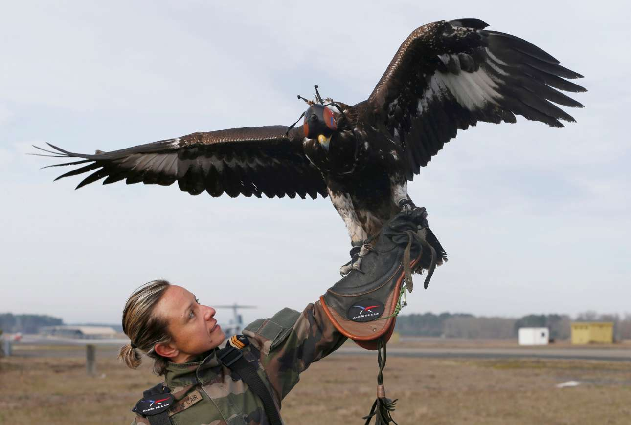 Η στρατιωτική εκπαίδευση των αετών απαιτεί πολύ χρόνο και μεγάλη προσπάθεια από τους εκπαιδευτές