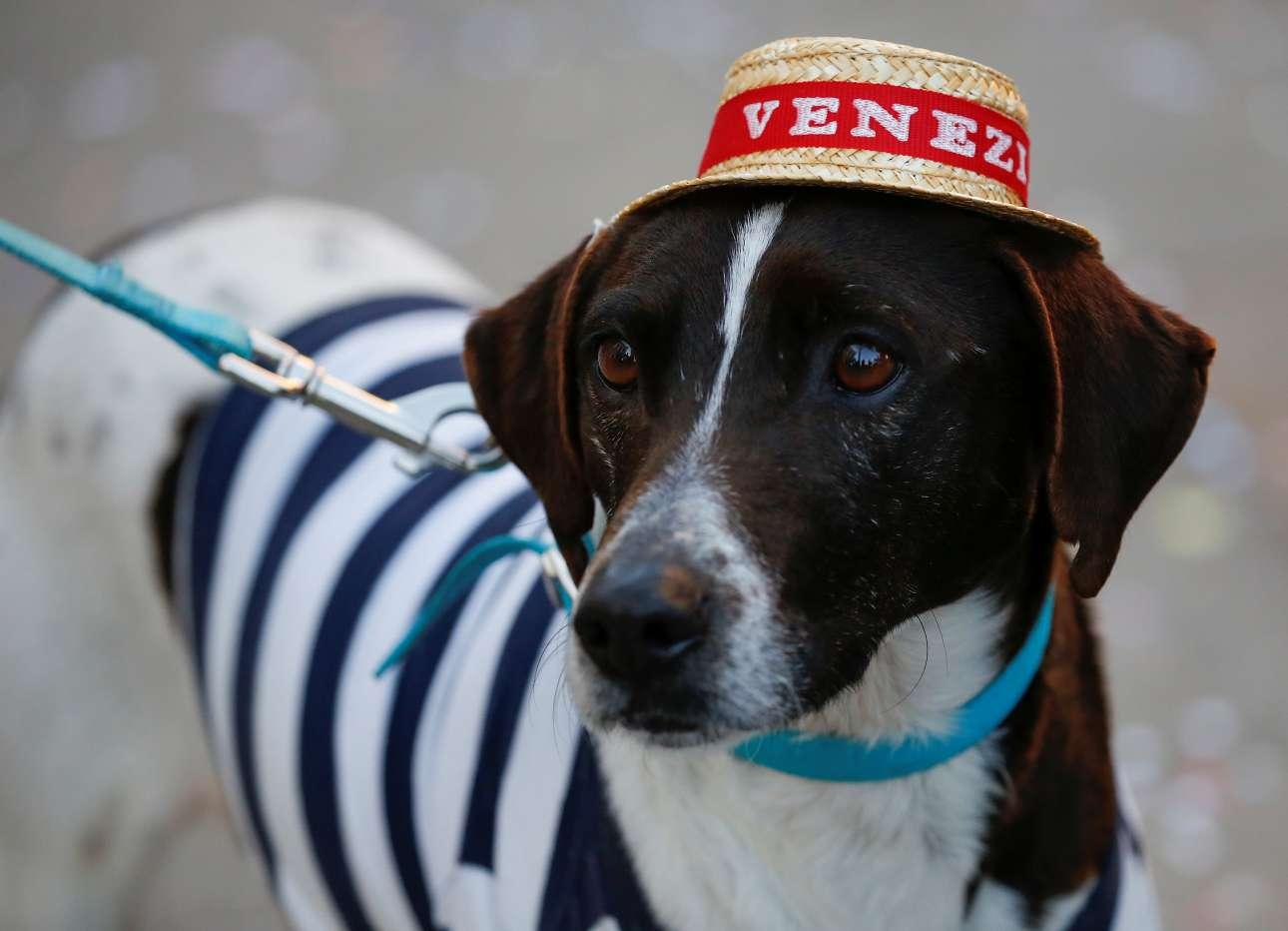 Από το αποκριάτικο κλίμα δεν λείπουν ούτε τα ζώα...ένας πανέμορφος σκύλος ντυμένος γονδολιέρης
