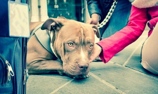 unhappy dog upset _395798515