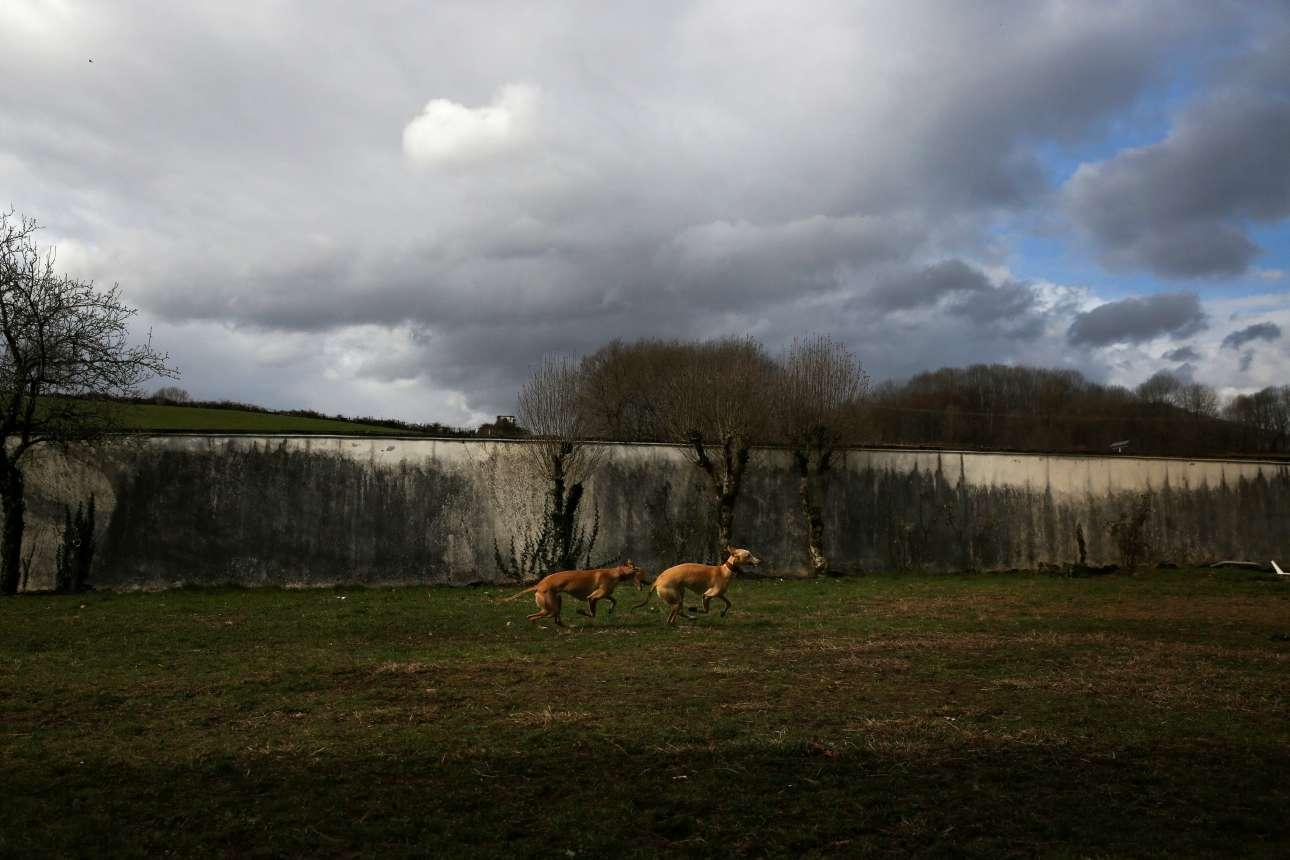 Τα δύο σκυλιά παίζουν στις εγκαταστάσεις της κλινικής «Μπενίτο Μένι», στα σύνορα με Γαλλία. Τα ζώα θεραπείας περνούν από ειδική εκπαίδευση πριν συμμετάσχουν στα συγκεκριμένα προγράμματα