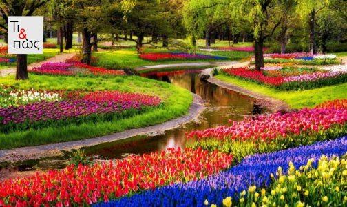 Festival_flower-TiPos-1024x681