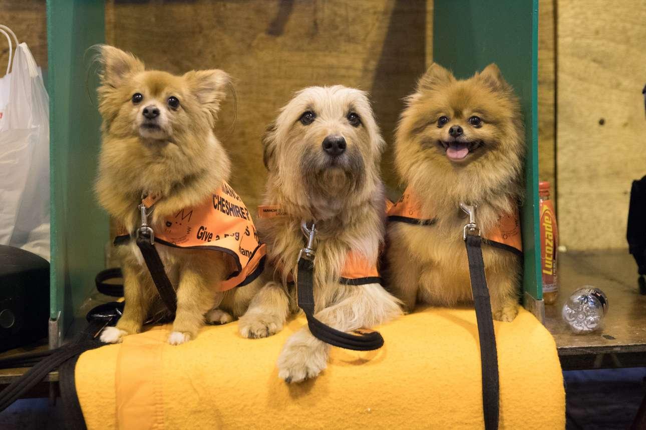 Το «Κουτάβι», ο «Μαξ» και η «Ντέμπι» κάθονται στον πάγκο περιμένοντας τη σειρά τους, την τελευταία μέρα του διαγωνισμού