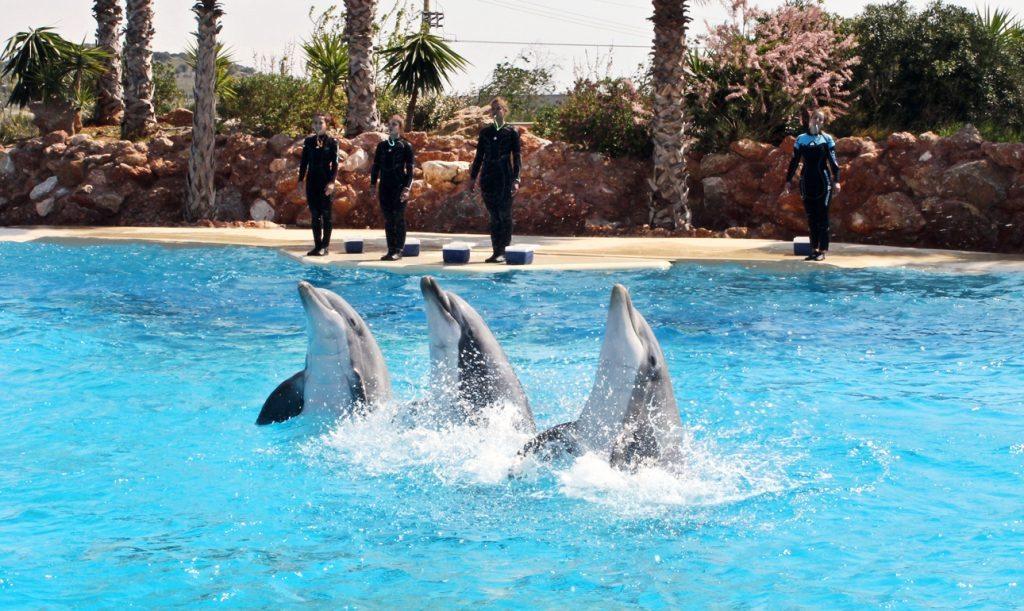 Αποτέλεσμα εικόνας για Τα δελφίνια στο Αττικό Πάρκο υποφέρουν