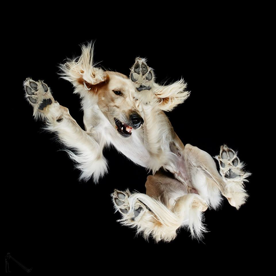 Μετά από τα τρία επιτυχημένα βιβλία «Under-cats», «Under-rabbits» και «Under-horses», ο Μπούρμπα μόλις κυκλοφόρησε και ένα με φωτογραφίες σκυλιών, με τίτλο «Under-dogs»