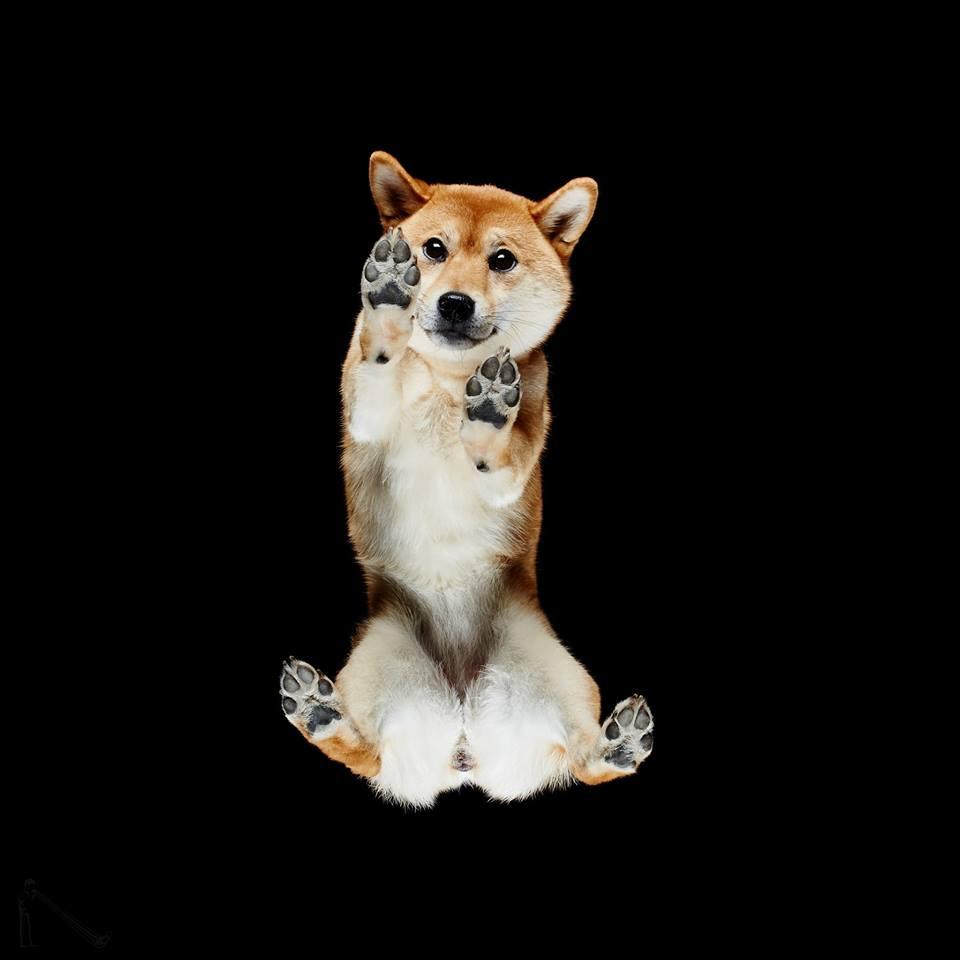 Σύμφωνα με τον φωτογράφο μερικά σκυλιά «κοκαλώνουν» μόλις ανέβουν στη γυάλινη επιφάνεια