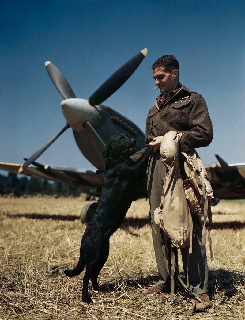 Ο καλύτερος φίλος ενός πιλότου... Ο κορυφαίος πιλότος της RAF Τζέιμς «Τζόνι» Τζόνσον σε ένα τρυφερό στιγμιότυπο με τη σκυλίτσα του «Σάλι» και με φόντο το θρυλικό μαχητικό Spitfire, στη Νορμανδία τον Ιούλιο του 1944