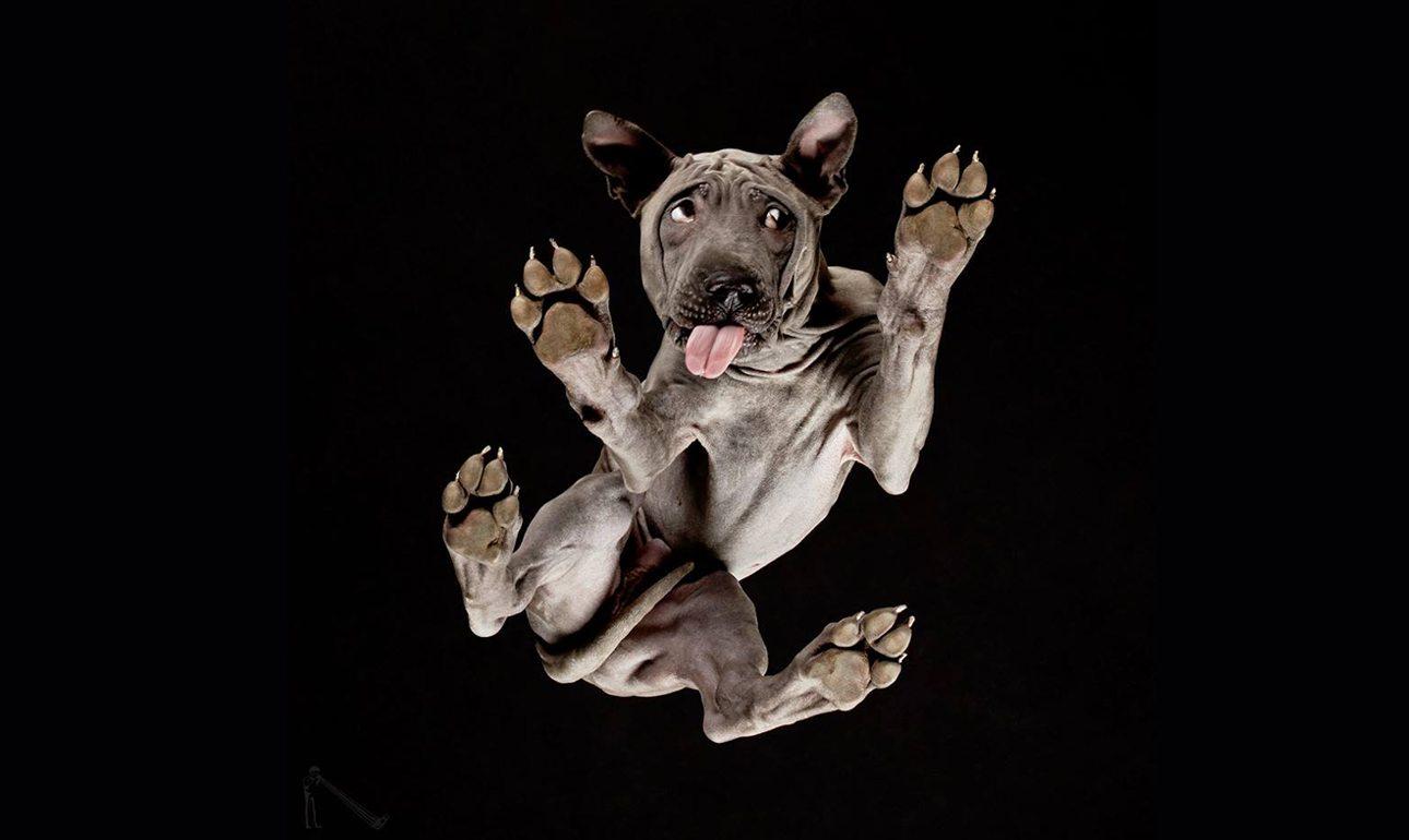 Ο πανέμορφος σκύλος με ύφος απορημένο