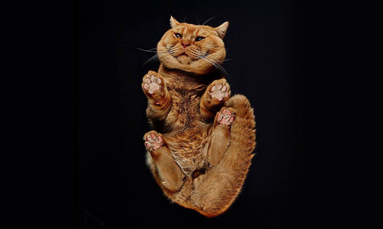 Το πρότζεκτ του Μπούρμπα ξεκίνησε πρώτα με γάτες