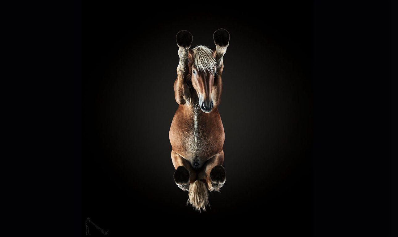 Στις εντυπωσιακές φωτογραφίσεις αλόγων, ο Αντριους Μπούρμπα ευχόταν να μην σπάσει το γυαλί, καθώς κάθε άλογο ζύγιζε περίπου 600 κιλά. Για τη συγκεκριμένη φωτογραφική σειρά χρειάστηκαν δύο μήνες προετοιμασίας