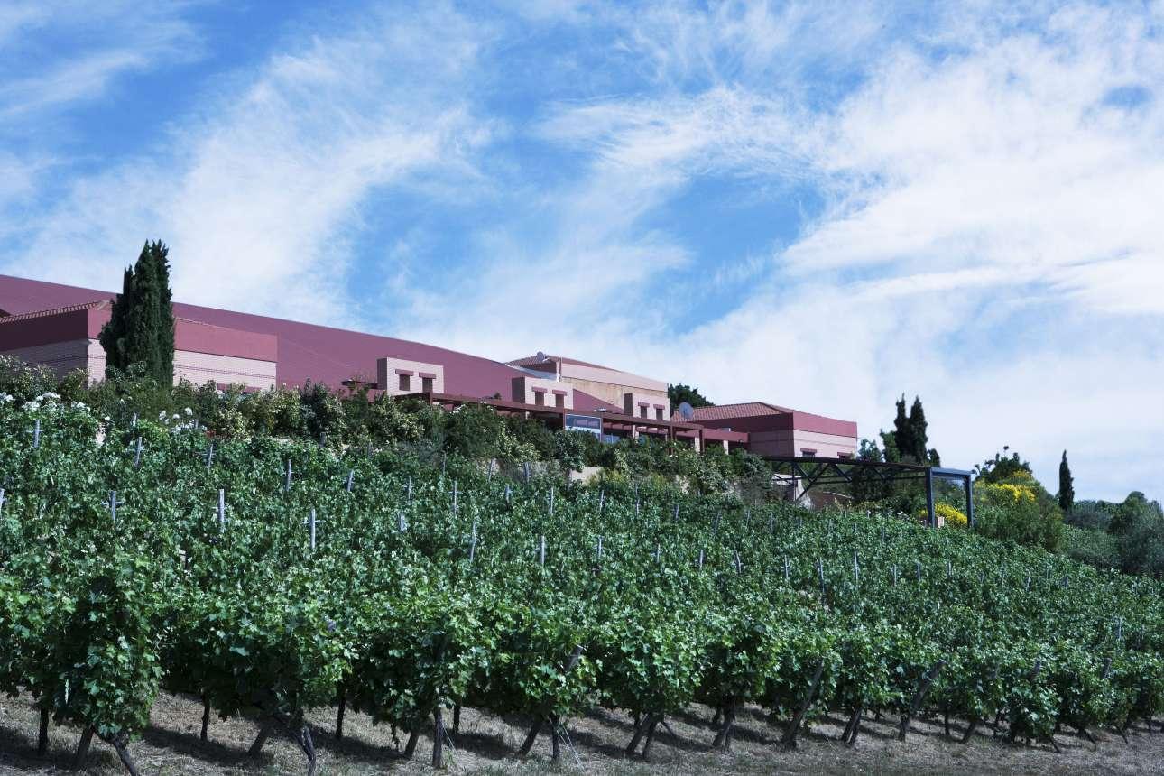SEMELI WINERY_ winery