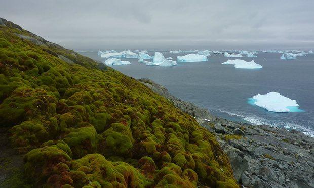 Ορισμένα νησιά της Ανταρκτικής όπως το εικονιζόμενο έχουν αρχίσει να αποκτούν πρωτοφανή επίπεδα χλωρίδας. (φωτόt: Matt Amesbury)