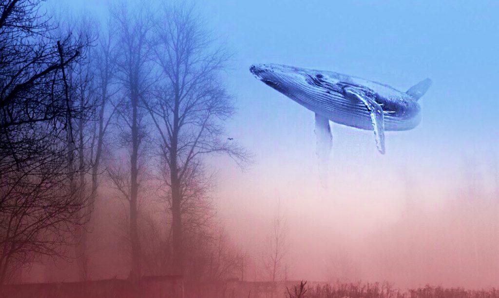 Αποτέλεσμα εικόνας για «Μπλε Φάλαινα»: Ενα «παιχνίδι» αυτοκτονίας που εκκολάφτηκε από τα fake news