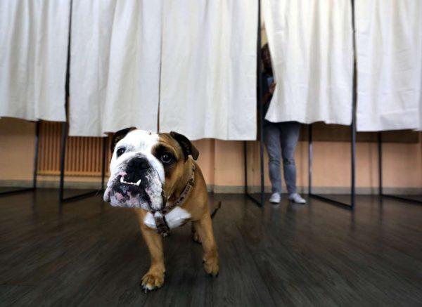 Χαριτωμένο εκλογικό στιγμιότυπο...
