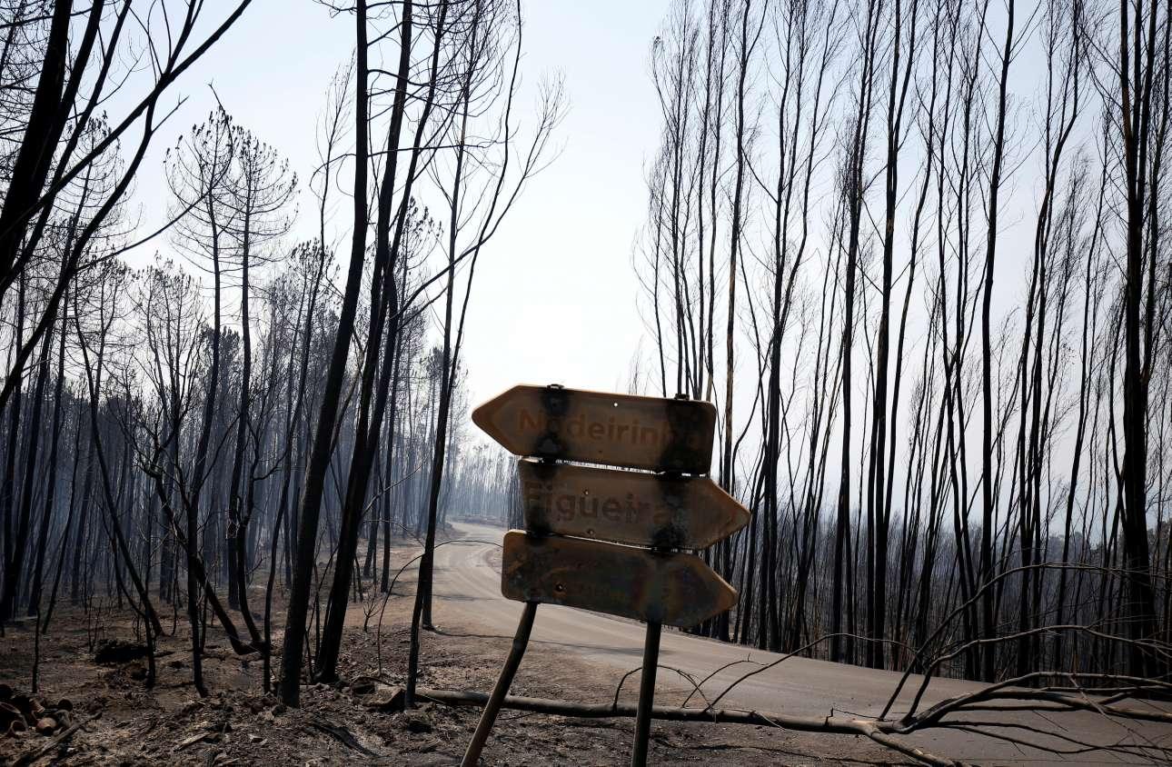 Καμένα δέντρα και πινακίδες στη δασική περιοχή του Φιγκεϊρό ντος Βίνιος