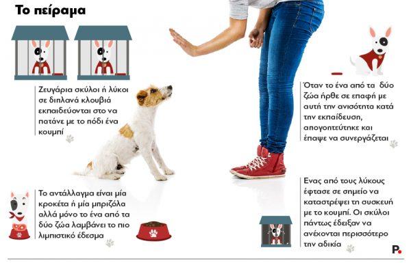 Dog_training_Protagon