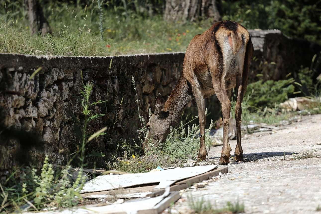 Τα ζώα που μεγαλώνουν πλέον στο δάσος αντιμετωπίζουν σοβαρά προβλήματα εύρεσης τροφής
