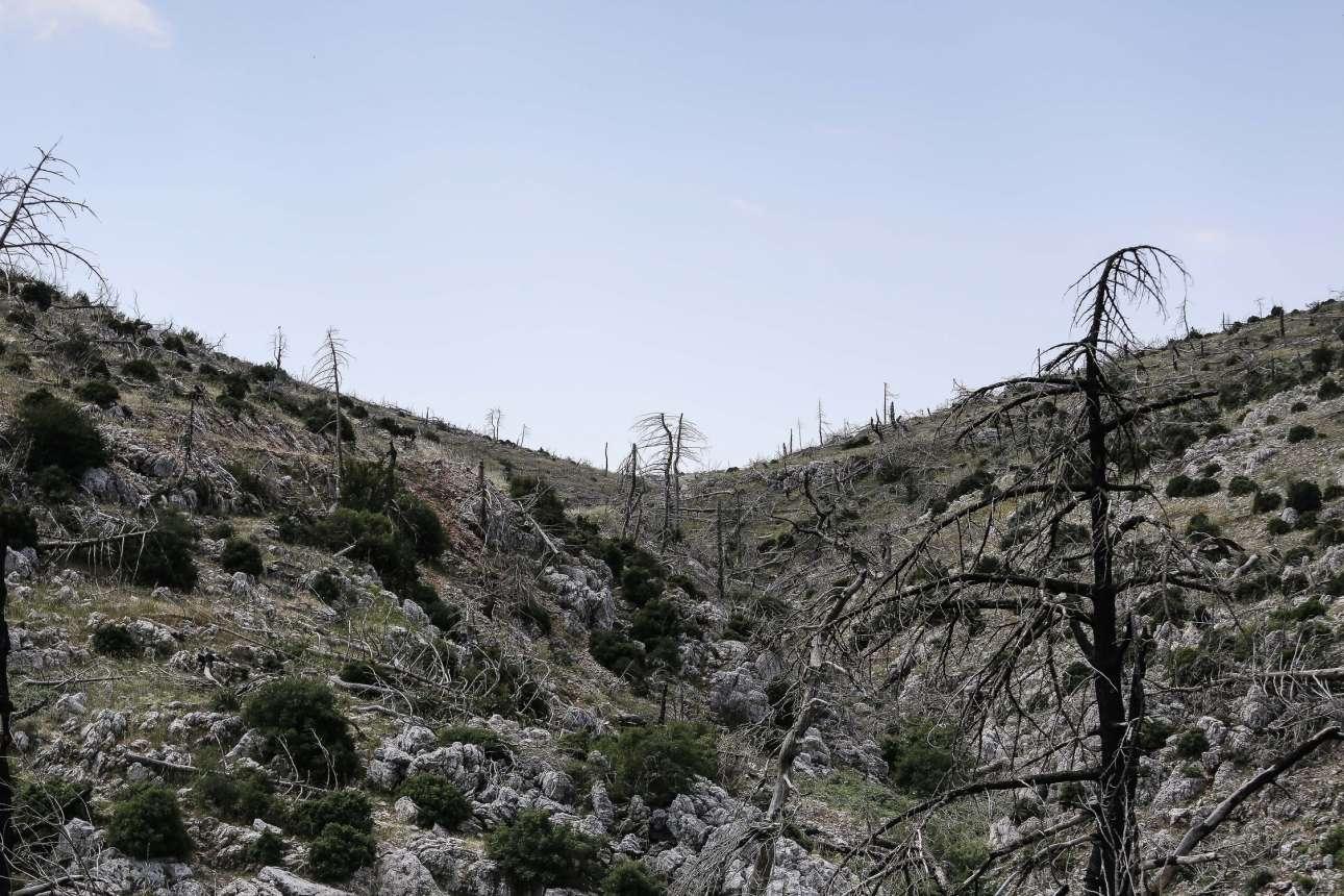 Δέκα χρόνια μετά και η καταστροφή του πανέμορφου φυσικού περιβάλλοντος, είναι ακόμα εμφανής. Θάμνοι όμως έχουν ανθίσει στην καμμένη γη