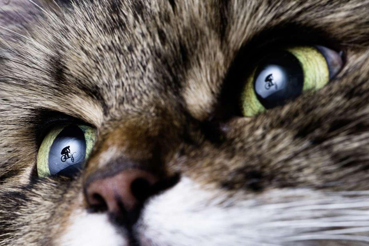 Φιναλίστ, κατηγορία «Νέα Δημιουργικότητα». Αντανακλάσεις στα μάτια της γάτας του φωτογράφου. Ο Εσθονός Τζάνους Ρι ήθελε να αποτυπώσει την ανθρώπινη σιλουέτα μέσα από τα μάτια ενός ελέφαντα, ωστόσο δεν πήρε άδεια από τον τοπικό ζωολογικό κήπο και αποφάσισε να χρησιμοποιήσει την γάτα του
