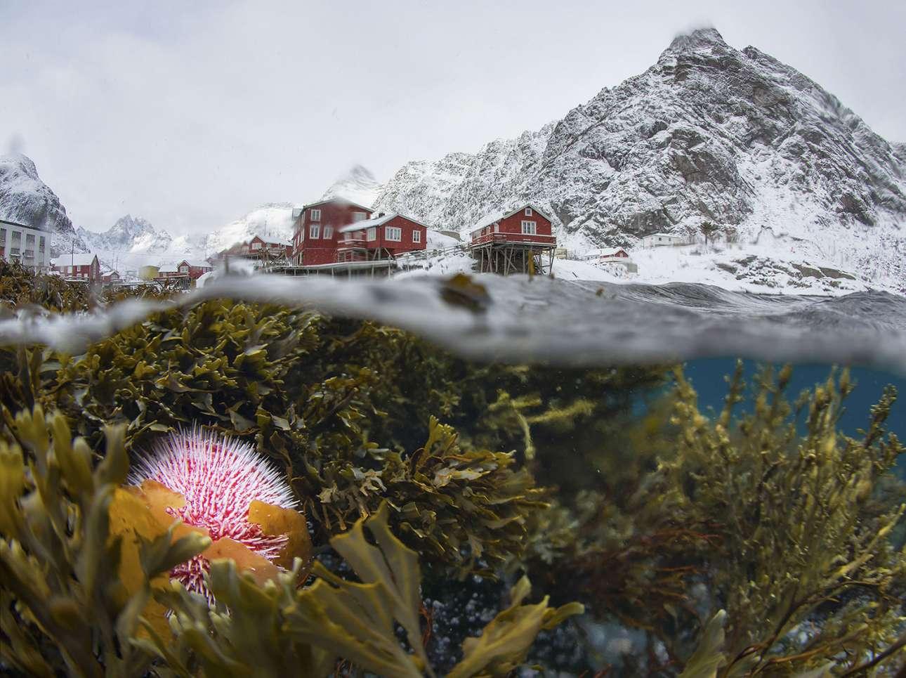 «Υποβρύχια, χειμερινή θέα των Λοφότεν». Ενας υπέροχος συνδυασμός δύο φωτογραφιών από το συγκλονιστικό τοπίο των νήσων Λοφότεν, στη Νορβηγία
