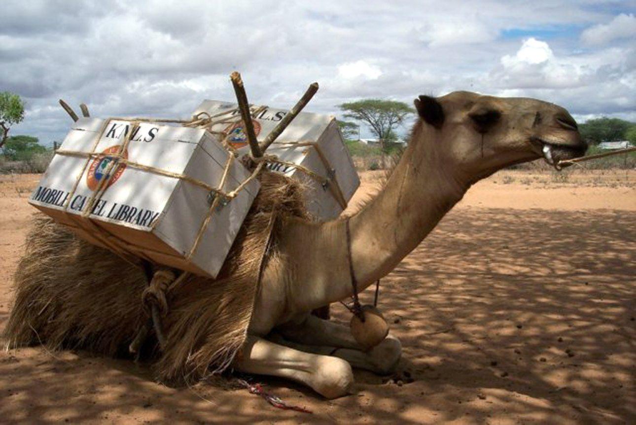 Ενα ακόμη παράξενο ζώο αναλαμβάνει χρέη βιβλιοθηκάριου... Καμήλες-βιβλιοθήκες προωθούν την ανάγνωση και τον αλφαβητισμό σε απομακρυσμένες περιοχές της βορειοανατολικής Κένυας