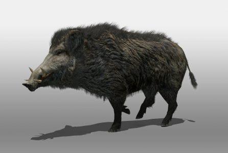 wild_boar_3d_model_c4d_max_obj_fbx_ma_lwo_3ds_3dm_stl_678115_o