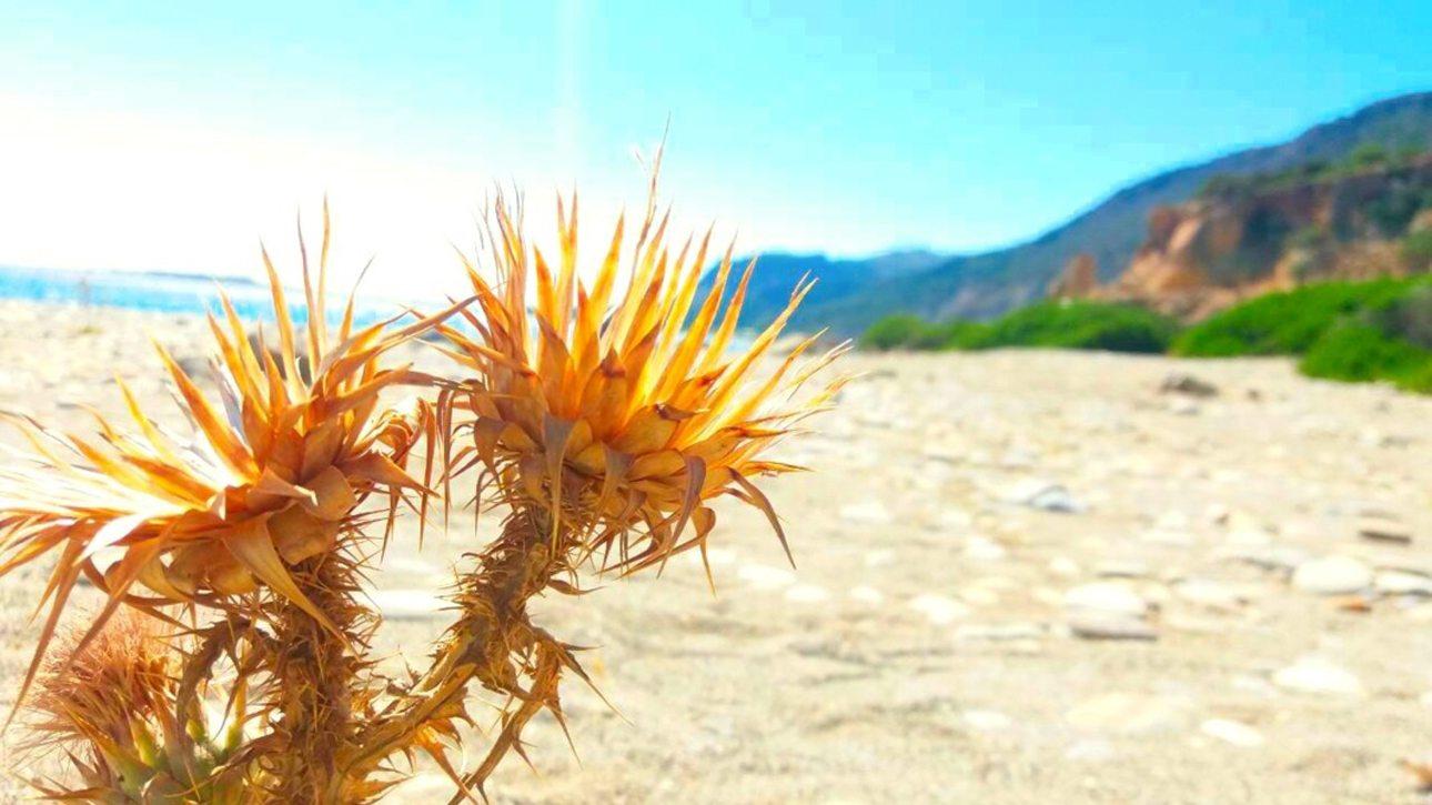 Η υπέροχη κρητική φύση με τα χαρακτηριστικά χρώματα και λουλούδια