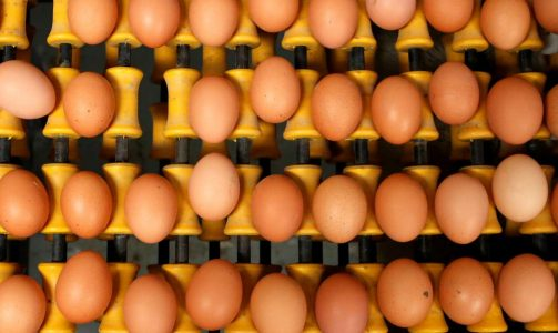 2017-08-08T152246Z_447822106_RC15F2318C30_RTRMADP_3_EUROPE-EGGS