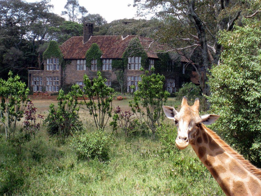 Giraffe Visiting Kenya-flickr