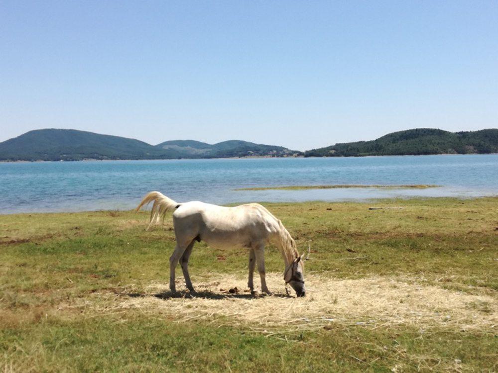 Ενα πανέμορφο άλογο με φόντο τη λίμνη Πλαστήρα