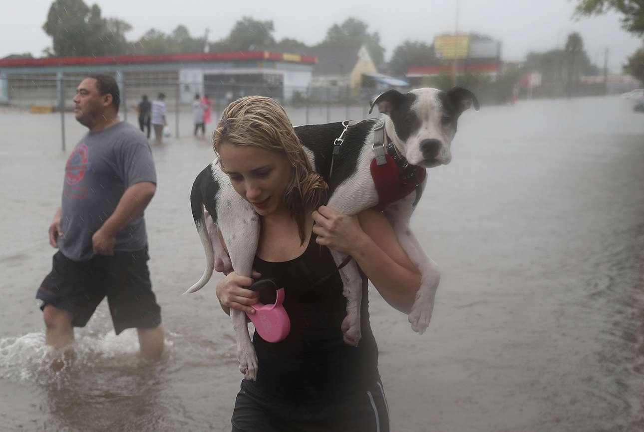 H νεαρή Ναόμι Κότο κουβαλά τον σκύλο της, τον Σίμπα, λίγη ώρα αφού έχει εγκαταλείψει το σπίτι της στο Χιούστον