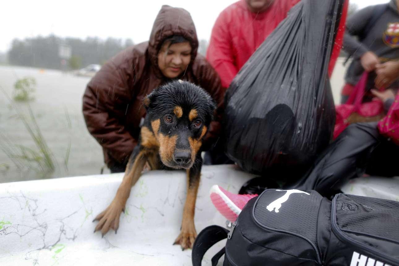 Ο φόβος είναι αποτυπωμένος στα μάτια αυτού του σκύλου ενώ ανεβαίνει στην βάρκα διασωστών