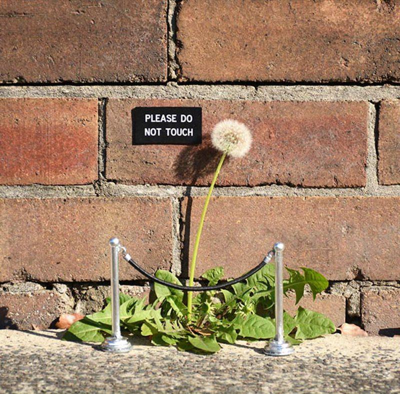 «Παρακαλώ μην αγγίζετε» το λουλούδι - έργο τέχνης