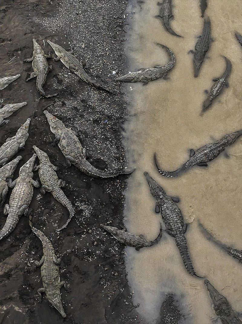 «Κροκόδειλοι στο Ρίο Ταρκόλες» - Τρίτη θέση, κατηγορία Φύση. 30 - 40 αμερικανικοί κροκόδειλοι συγκεντρωμένοι στις όχθες του ποταμού Ταρκόλες στην Κόστα Ρίκα. Ο φωτογράφος ήθελε να αιχμαλωτίσει την έντονη διαφορά ανάμεσα στους κορκόδειλους που βρίσκονται στην στεριά και φαίνονται τεράστιοι σε αντίθεση με αυτούς που είναι μέσα στο νερό