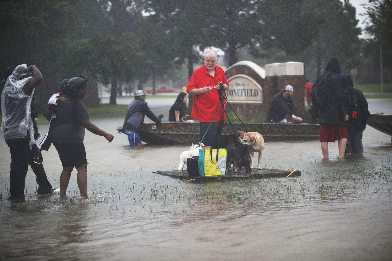 Προσωρινή ξεκούραση. Ενας ηλικιωμένος άνδρας προστατεύει τέσσερα σκυλιά περιμένοντας μια βάρκα για να τα σώσει