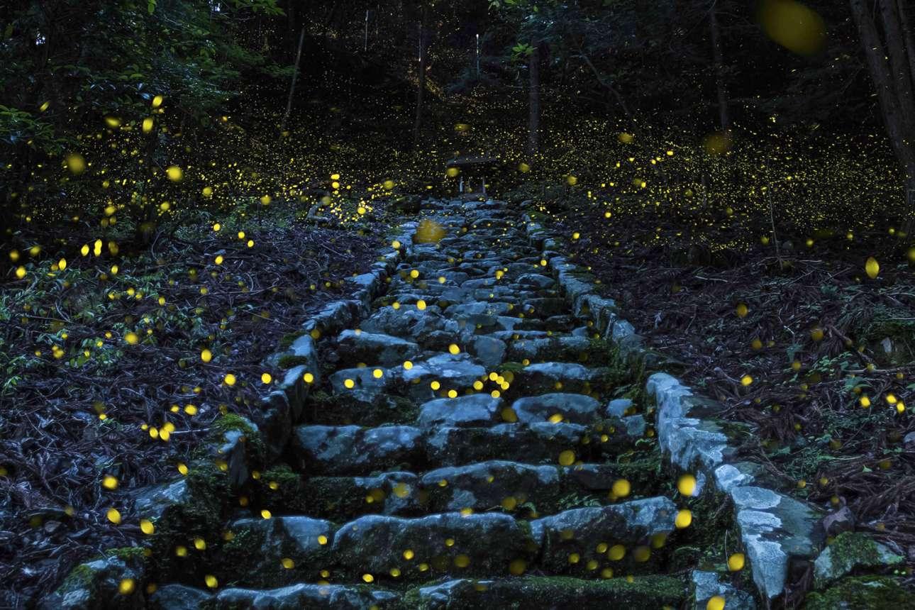 «Το δάσος των νεράιδων» - Ειδική μνεία, κατηγορία Φύση. Μαγική ατμόσφαιρα ένα καλοκαιρινό απόγευμα, σε απομακρυσμένο χωριό στην περιοχή Τάμπα της Ιαπωνίας. Πυγολαμπίδες έχουν κατακλύσει την πέτρινη σκάλα που οδηγεί σε ένα μικρό ναό, μέσα στο Δάσος των Θεών
