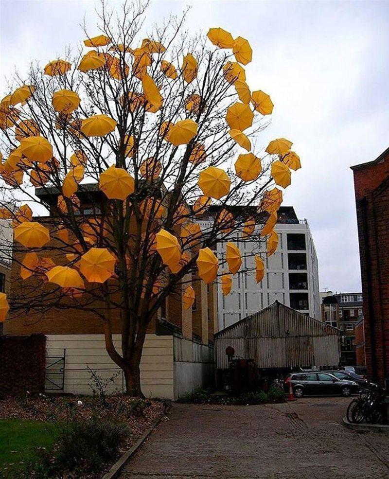 Ενα υπέροχο φθινοπωρινό δέντρο, όπου τα φύλλα αντικαθιστούν κίτρινες ομπρέλες