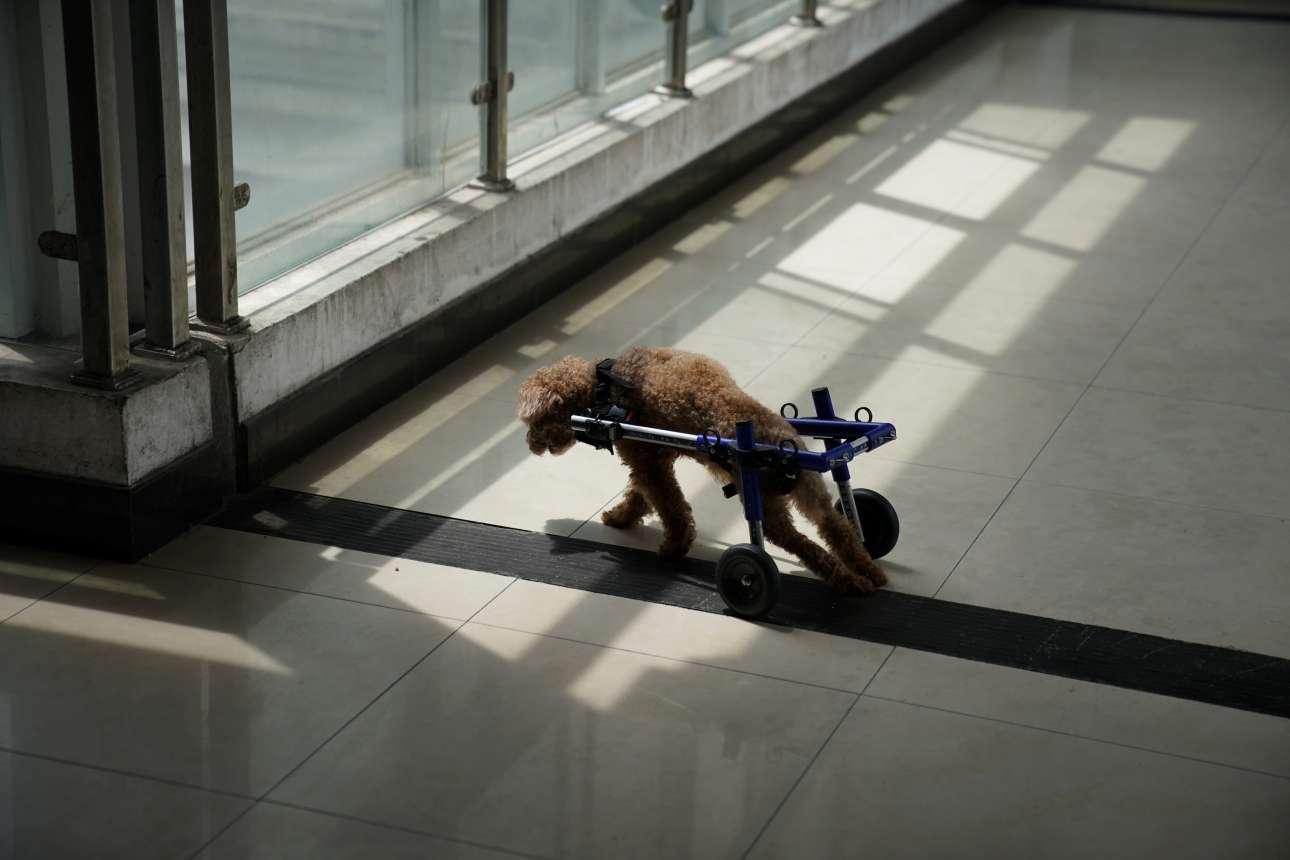 «Το να καταφέρουμε ένα παράλυτο και εξαρτημένο σκυλί να σηκωθεί είναι ο απώτερος στόχος μας» λέει ο Ρίσαν
